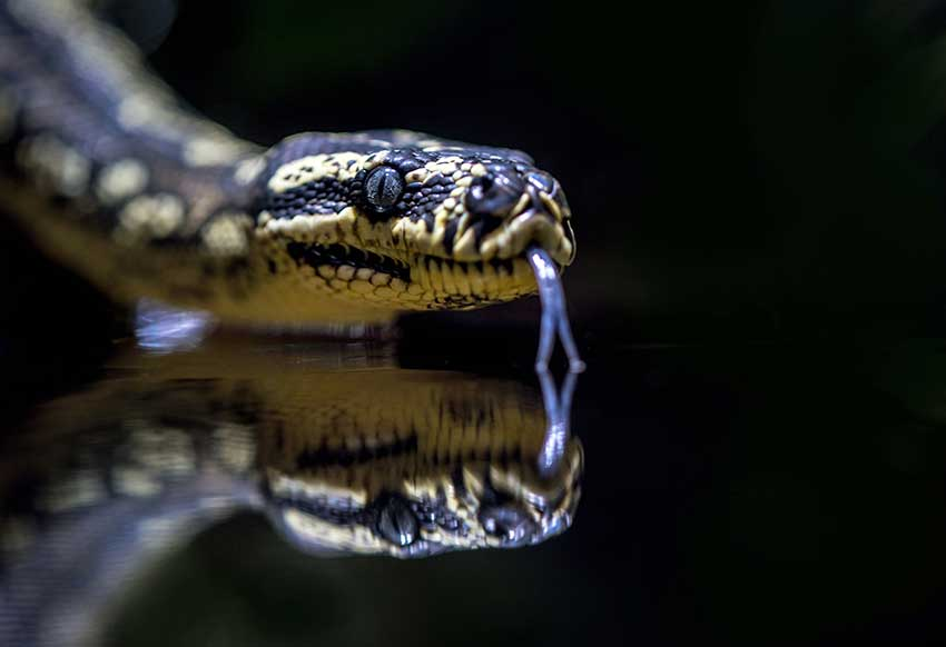 Dreams-About-Snakes-Header