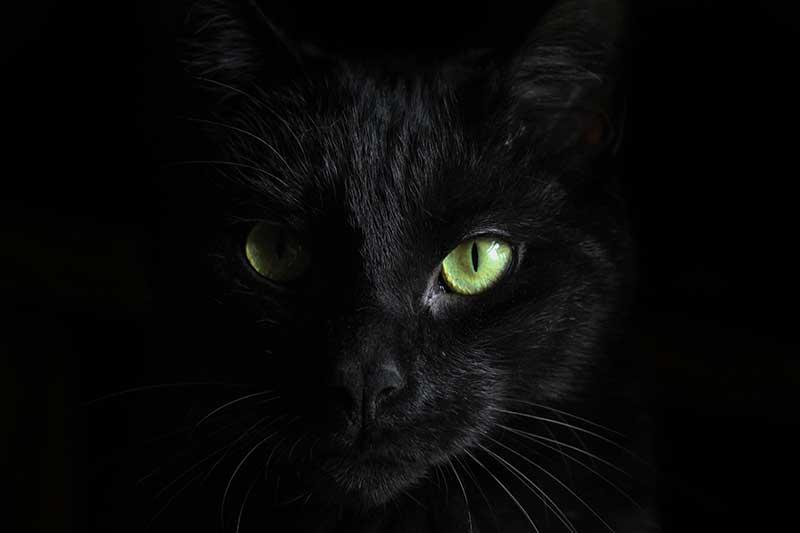 Cat-Scratch-Game