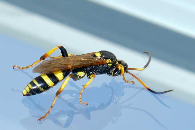 wasps-in-dreams